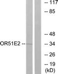 G447-1 - Olfactory receptor 51E2