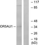 G476-1 - Olfactory receptor 5AU1