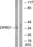 G490-1 - Delta-type opioid receptor