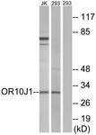 G502-1 - Olfactory receptor 10J1