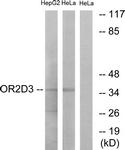 G546-1 - Olfactory receptor 2D3