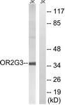 G548-1 - Olfactory receptor 2G3