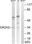 G551-1 - Olfactory receptor 2H2