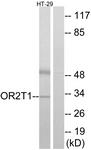 G565-1 - Olfactory receptor 2T1