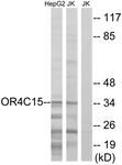 G589-1 - Olfactory receptor 4C15