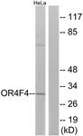G599-1 - Olfactory receptor 4F4