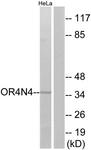 G610-1 - Olfactory receptor 4N4