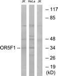 G637-1 - Olfactory receptor 5F1