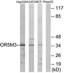 G648-1 - Olfactory receptor 5M3