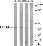 G650-1 - Olfactory receptor 5M9