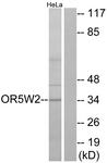 G657-1 - Olfactory receptor 5W2