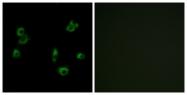 G722-1 - PERV-A receptor 1