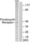 G725-1 - Prostacyclin receptor / PTGIR