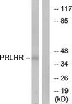 G728-1 - PRLHR / GPR10