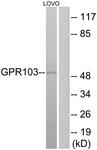 G734-1 - QRFPR / GPR103