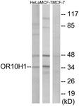 G827-1 - Olfactory receptor 10H1