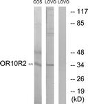 G831-1 - Olfactory receptor 10S1