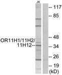 G835-1 - Olfactory receptor 11H1/11H2/11H12