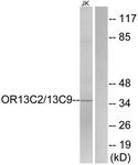 G838-1 - Olfactory receptor 13C2/13C9