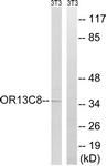 G840-1 - Olfactory receptor 13C8