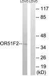 G846-1 - Olfactory receptor 51F2