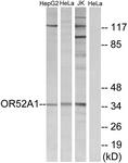 G850-1 - Olfactory receptor 52A1