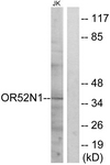 G863-1 - Olfactory receptor 52N1