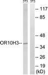 G878-1 - Olfactory Receptor 10H3/10H4