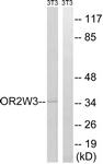 G899-1 - Olfactory receptor 2W3