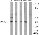 G931-1 - Olfactory receptor 8D1