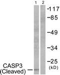 L0104-1 - Caspase-3