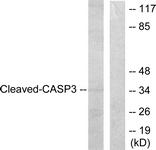 L0105-1 - Caspase-3