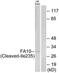 L0126-1 - Coagulation factor X (F10)