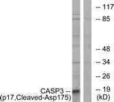 L0153-1 - Caspase-3