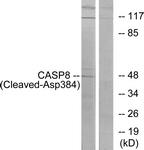L0167-1 - Caspase-8 / FLICE