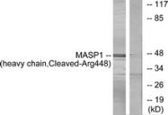 L0238-1 - MASP-1