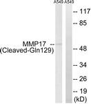 L0325-1 - MMP-17