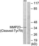 L0330-1 - MMP-23