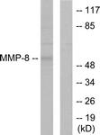 C0274-1 - MMP-8