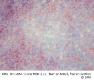 T-1054 - CD48