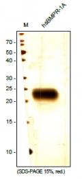 DA3521 - CD292 / BMPR1A