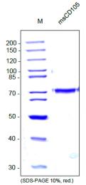 DA3522 - CD105 / Endoglin