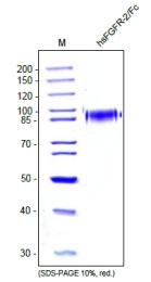 DA3527 - CD332 / FGFR-2