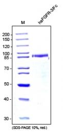 DA3528 - CD333 / FGFR3