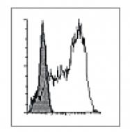 DDX0081B-50 - CD1a