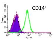 DDX0201P-50 - CD209 / DC-SIGN