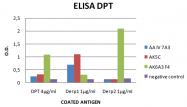 DDX0211P-50 - Peptidase 1 / DERP1