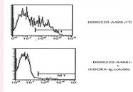 DDX0220A488-50 - DORA / IGSF6