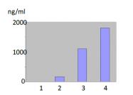 DDX0281-HRPO-50 - MMP-12