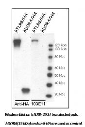 DDX0482A488-50 - CD288 / TLR8